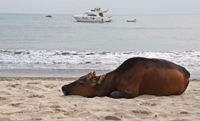 buffalo-beach-hong-kong004.jpg